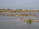 Delta_Llobregat