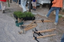 Plantada a Sant Pau