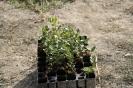 Plantades